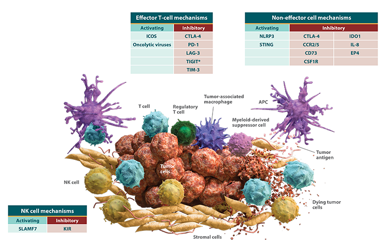 Diagram of a tumor microenvironment