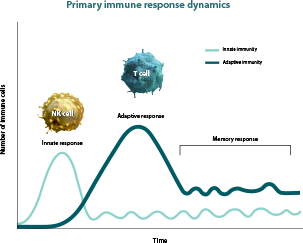 Memory response expressed in a chart comparing innate immune response to adaptive immune response over time