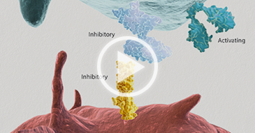 Thumbnail for How Does the Immune System Respond to Cancer video