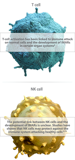 Diagram of T cell activation and NK cells' link to IMAR development