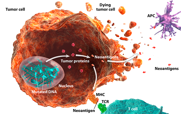 Mutated DNA pathway expressed in a dying tumor cell diagram