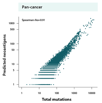 Neoantigen and total mutations correlation chart
