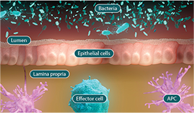Diagram of the microbiome