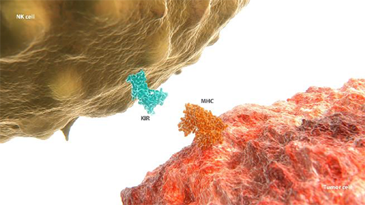 KIR pathway expressed on NK cells diagram