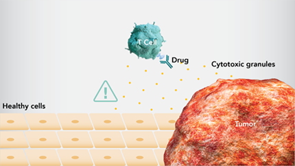 Immunotherapy promotes the antitumor response of activated cytotoxic T cells by targeting the immune system, enabling T cells to attack the tumor. However, this can sometimes cause T cells to target healthy tissue, leading to adverse events known as immune-mediated adverse reactions.